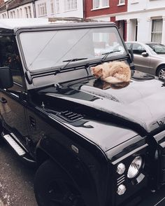 Cat nappin' in style. | #landrover #defender #landroverdefender #fulham #cat #black #wild #explore #discover #igers #igerslondon #london #thisislondon #london_only #vsco #vscocam #vscocamonly #vscolondon @landrover @landroversoflondon by jamesbrewster Cat nappin' in style. | #landrover #defender #landroverdefender #fulham #cat #black #wild #explore #discover #igers #igerslondon #london #thisislondon #london_only #vsco #vscocam #vscocamonly #vscolondon @landrover @landroversoflondon