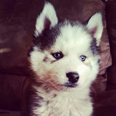 Awww what a sweet face Animals And Pets, Cute Animals, Husky Husky, Make You Smile, Animal Kingdom, Animal Pictures, Creatures, Puppies, Dogs