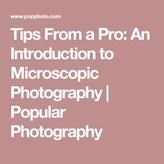 Tips From a Pro: An Introduction to Microscopic Photography | Popular Photography