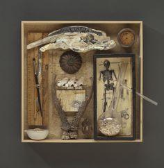 Cabinet of Curiosities: Box #6