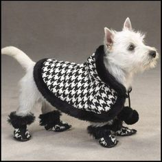 Google Image Result for http://www.kathryngreeleydesigns.com/blog/wp-content/uploads/2011/02/dog-in-boots.jpg