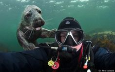 "Seal photobomb - A U.K.-based marine biologist, author and underwater photographer said that he encountered this playful seal while diving in the Farne Islands off the northeastern coast of England a few weeks ago.    ""Yes that is me, the one on the right,"" he joked."