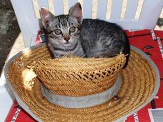 Koko szereti a kalapot Laundry Basket, Wicker, Gardening, Organization, Home Decor, Getting Organized, Organisation, Decoration Home, Room Decor