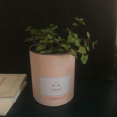 Kit Pour Jolies Plantes A Imprimer Planter Des Fleurs Plante Kit