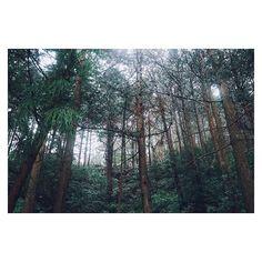【ytkr89】さんのInstagramの写真をピンしています。《(:-)ここ登れる、と思うとクロックスなのも忘れて登っちゃう 笑 + .. + #nature #landscape #forest #vsco#vscocam #instagramjapan #igersjp  #林 #自然 #植物 #写真好きな人と繋がりたい  #デジタルでフィルムを再現したい》