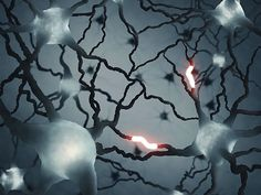 (Medical Xpress)—Drugs that boost the function of a specific type of neurotransmitter receptor may provide benefit to patients with the second most common type of dementia, Frontotemporal dementia, known as FTD, according to research by scientists at the University of Alabama at Birmingham published today in the Journal of Neuroscience.