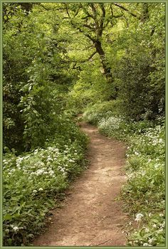 Natural Garlic Path, North Yorkshire, England.