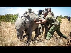 Rama's Rescue | Orphaned Elephant | Sheldrick Trust - YouTube Lonely, Trust, Elephant, Youtube, Animals, Heart, Kenya, Animales, Animaux