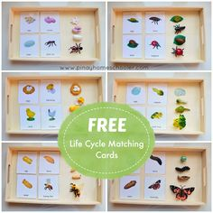 FREE Life Cycle Cards for practicing exactness, visual discrimination