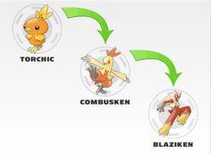 Torchic evolution