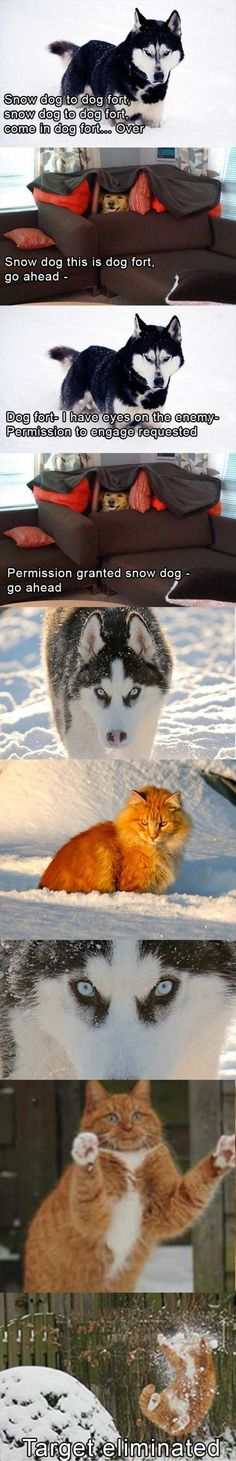 "It made me laugh. ""Snow Dog to Dog Fort. Snow Dog to Dog Fort. Come in Dog Fort. Humor Animal, Funny Animal Memes, Dog Memes, Funny Animal Pictures, Funny Dogs, Cute Dogs, Funny Husky, Husky Meme, Funny Memes"