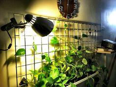 Plant Grid.
