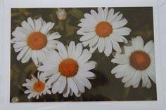 Five Daisy's Photo Note Card Daiseys  Blank Note Card by manukai