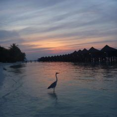 Sunset in Kuredu-by our room-thanks to whoever took this :D