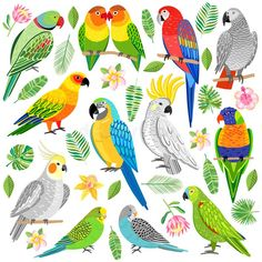 Illustration about Vector parrot illustration. Tropical bird isolated on white background. Illustration of blue, parakeet, cartoon - 111586662 Parrot Drawing, Parrot Painting, Parrot Flying, Parrot Fish, Bird Drawings, Animal Drawings, Bird Illustration, Illustrations, Parrot Craft