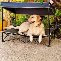 Keep your pet cool and safe from harmful UV rays with this portable outdoor instant pet shade with elevated mesh bed. It features a sturdy steel frame and durable PVC-backed polyester construction designed to withstand the rigors of outdoor use.