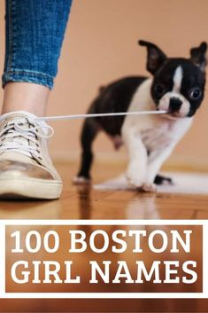 100 Female Boston Terrier Dog Name Ideas - Boston Terrier Society Red Boston Terriers, Boston Terrior, Boston Terrier Names, Cute Girl Dog Names, Puppy Names, Girl Names, Terrier Breeds, Bull Terrier, Best Apartment Dogs