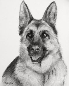 charcoal images sketches | ... In Charcoal Drawing - German Shepherd Drawn In Charcoal Fine Art Print