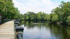 Waccamaw River, Conway, SC | *South Carolina On My Mind | Pinterest