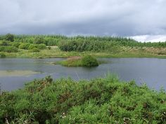 Drimmie Wood, by Blairgowrie
