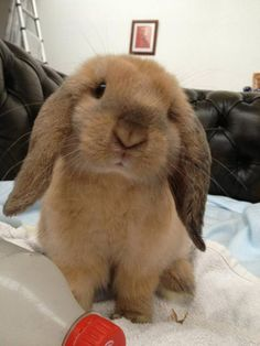 28 Bunny Photos That Will Warm Your Heart Cute Bunny Pictures, Baby Animals Pictures, Cute Animal Pictures, Cute Little Animals, Cute Funny Animals, Fluffy Animals, Animals And Pets, Cute Baby Bunnies, Bunny Bunny