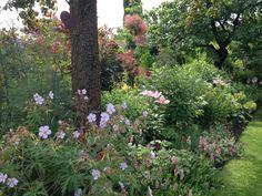 Gartenglück im Wandelgarten: Top-Pflanzen (3) - die Begleiter