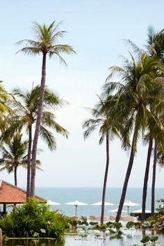 Palm tree beaches in Vietnam