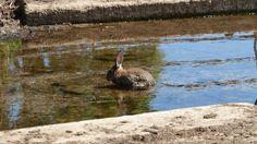 The bunny is too warm... (Linda Hansen)