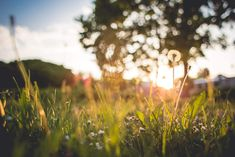 Just Another Grass Sunset Free Stock Photo Download