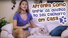 Ju Almeida - Aprenda como limpar os ouvidos do seu cachorro em casa
