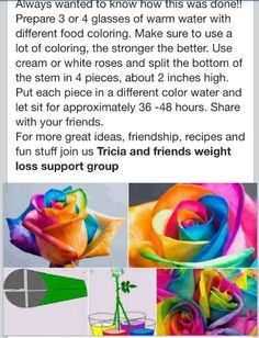 Diy grow colorful flowers