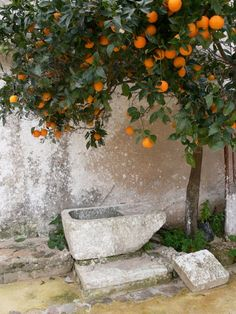 #Autumn in #Sicily with red orange tree in the countryside. Discover your #Trapani with our daily suggestion and tips www.bebtrapanigranveliero.it