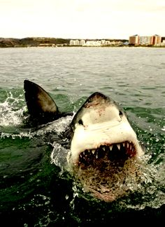I once smacked a shark on the nose... ( just not this one)