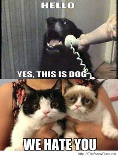 ☮✿★✝ CATS ✝☯★☮ Hello this is dog