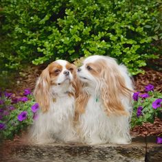 Lil Bit and Gracey, Cavalier King Charles Spaniels by Leanne Newman