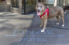 Kinzie Hotel Launches Chicago Style Pamper Your Pooch Package on National Dog…