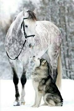 Pin by Yolanda Stadtler on Tiere Funny Horses, Cute Horses, Pretty Horses, Horse Love, Baby Animals Pictures, Cute Animal Pictures, Animals And Pets, Most Beautiful Horses, Animals Beautiful