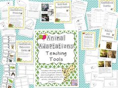 The Science Penguin: Animal Adaptations Teaching Tools $