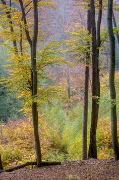 Wienerwald, Vienna Woods, Austria
