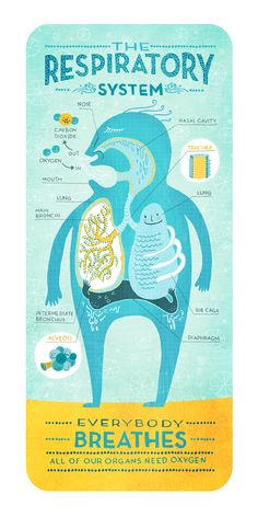 A playful take on the human respiratory system