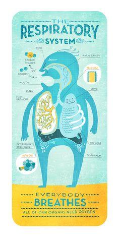 respiratory system - Rachel Ignotofsky Design  http://rachelignotofskydesign.com/