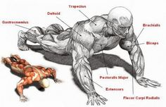 When push-ups are mentioned, first thing that comes to mind is probably chest training. Push ups are primarily a chest exercise, but with a little modification they can become a very good exercise for your arms and shoulders. Regular pushups do work your arms to a lesser degree, but push up variants such as the biceps push up or the diamond pushup target your triceps and biceps more. Do these two exercises 2 to 3 times a week to build your arms. Diamond Push Ups 1. Place your hands…