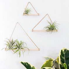 Simple, modern, and easy to make air plant hangers!