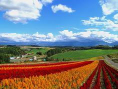 美瑛 by たつ, via Flickr Biei Hokkaido Japan