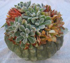 festive holiday decorations for home decor and gifting :: linda estrin garden design - pumpkins :: Gardenista