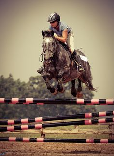 Gorgeous Horse and form!