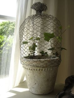 Chicken wire cage for ivy or any vine.  Use it to create a topiary-like plant for inside the house