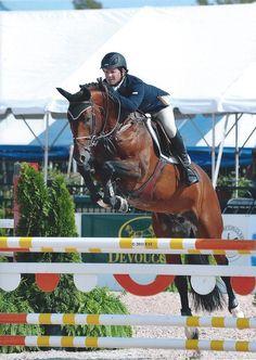 Dutch Warmblood stallion Bretagne VDL