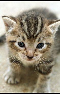"""""""I am kitty, hear me mew"""""""