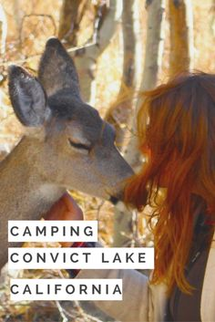Amazing family affordable and family friendly vacation. The deer are so tame and friendly they will let you pet them! You can camp with a tent or camp in a trailer. The camping ground is fully equipped with clean bathrooms and the view is stunning. Take a 2 hour hike around the lake, fish, horseback ride or grab a drink at the local resort. This gorgeous popular camping location in California has everything you could possibly want in a vacation!